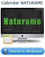 Paine fara gluten - Naturame.ro | produse bio