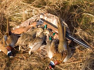 Kansas Hunting - The variety of hunting opportunities that sets Kansas apart.
