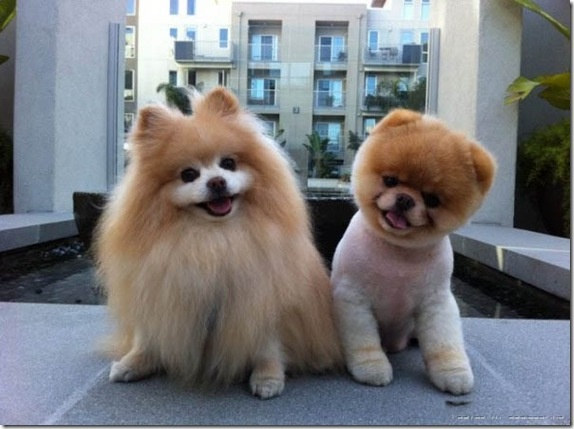 I love the dog on the right... so cute!
