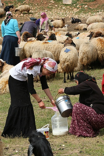 Milking the flock in a box canyon near to Mardin, SE Turkey