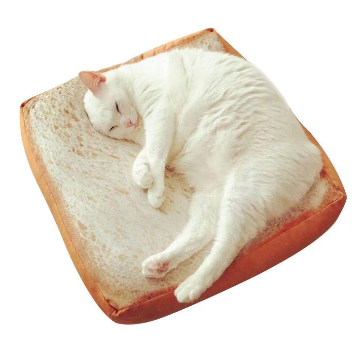 AmazonSmile : Zenpy Pet Cat Bed Mattress Soft Quilted Cat Cushion Pad Simulated Creative Toast Seat for Cute Animal Catty and Doggy Sleeping Playing Resting (FOAM) : Pet Supplies