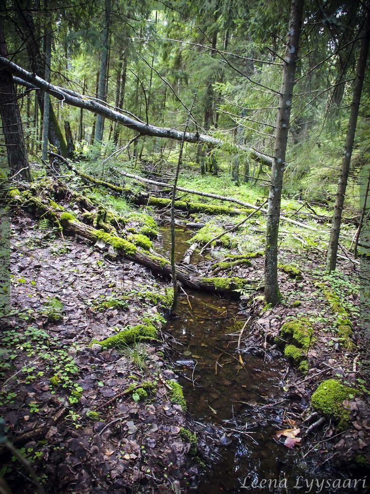 Sadevesi täyttää metsäojat