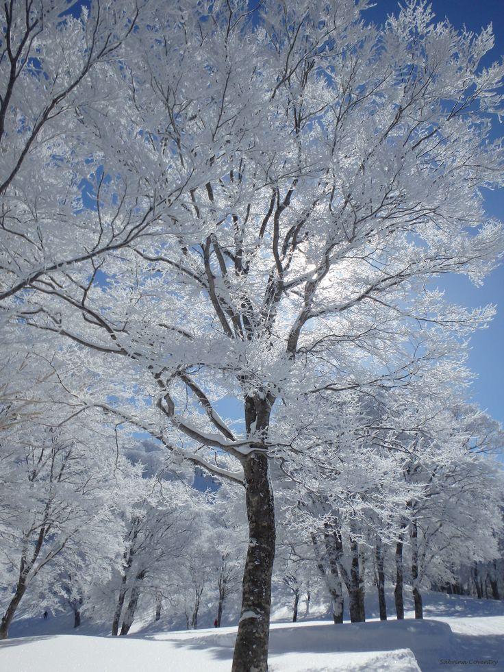 Skiing - Nozawa Onsen