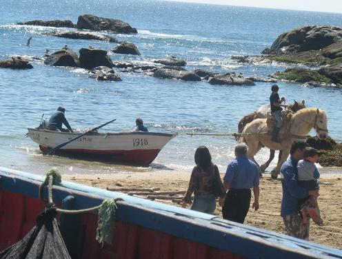 Los Caballos trabajadores de Horcon, Chile