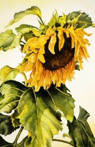 Sunflower by J.K. Herman