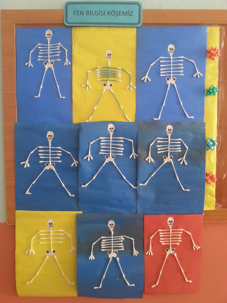 iskelet sistemi
