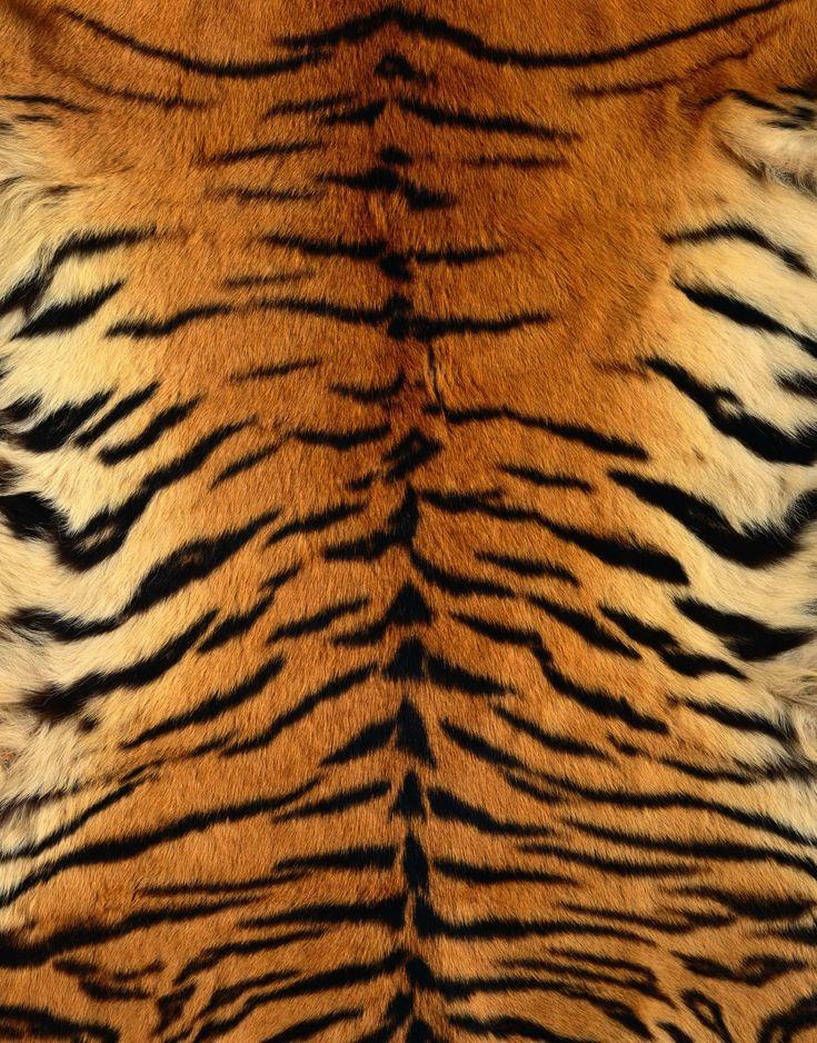 tiger skin - Google Search