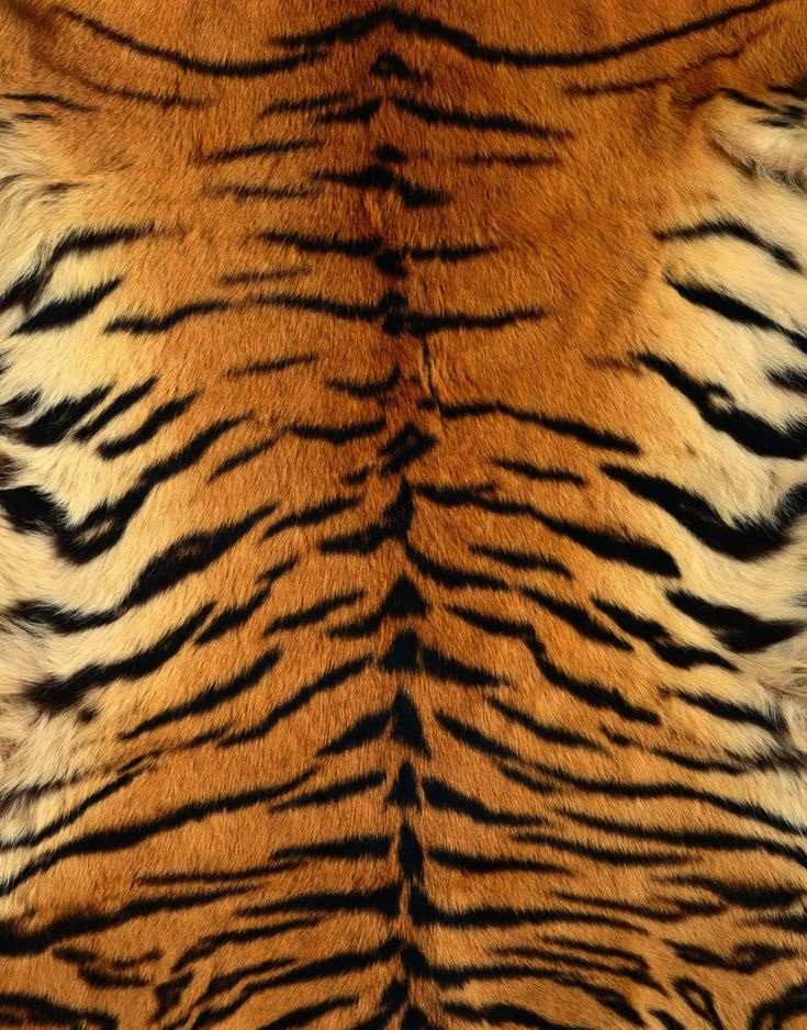 tiger skin - Google Search