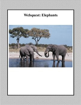 This is a web search designed to give students factual information about elephants as they read for information using the internet. During the search they use a variety of strategies and skills that will build their strengths in reading and writing as they describe the types of elephants and compare and contrast their features.  I've included a fun maze as well.