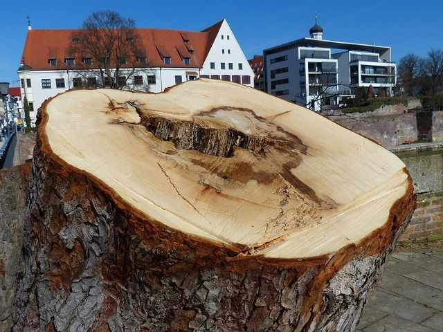 #Stump Close-Up - The #stump of a #tree recently cut down, photographed up close to show the detail of its inner section. #Large_trees are often cut or pruned in busy areas to reduce the chance of property damage and injury.
