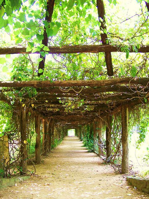 the Arboretum, Chapel Hill