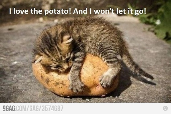Reminds me of the time when I kept a potato from Washington for almost a year...:P
