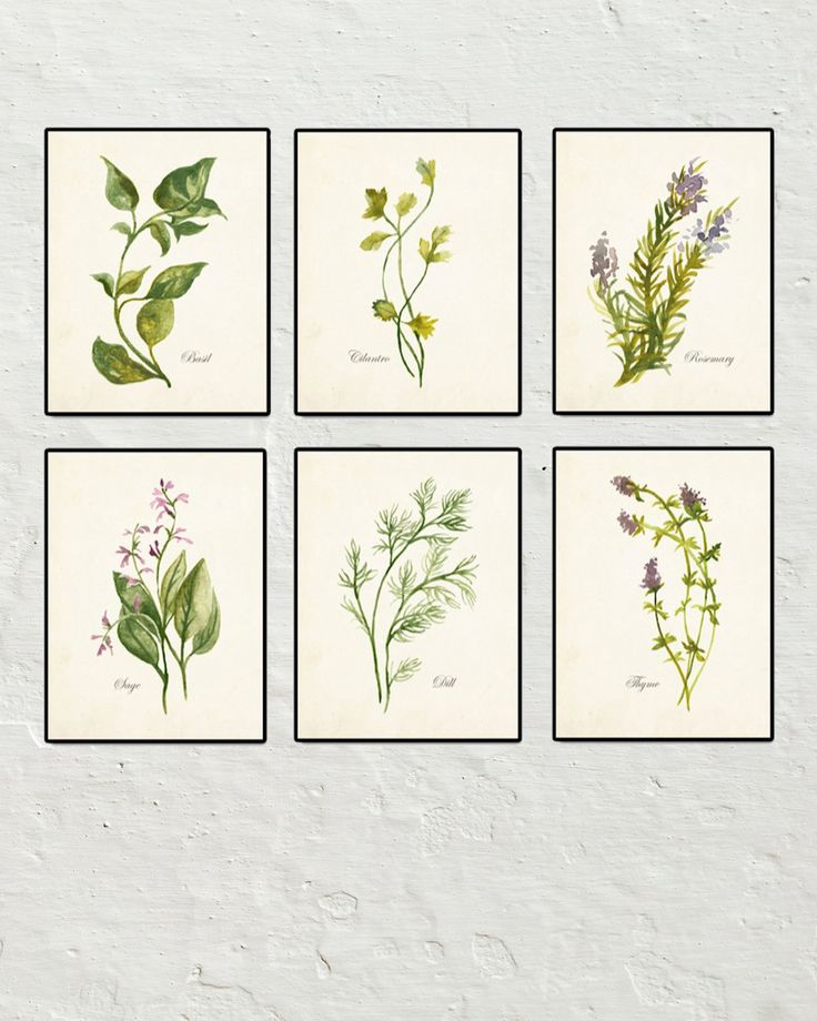Watercolor Herbs Set No 2 Botanical Print Set Printed On