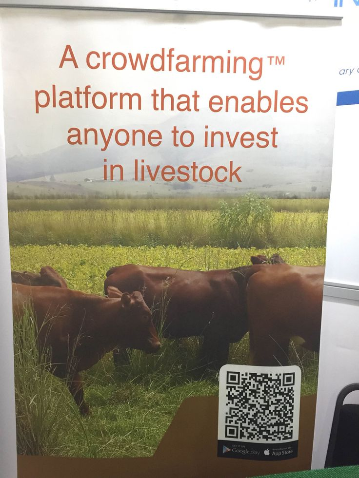 "Takes the idea of ""Steakholder"" to a new level @livestockwealth @willemgous"