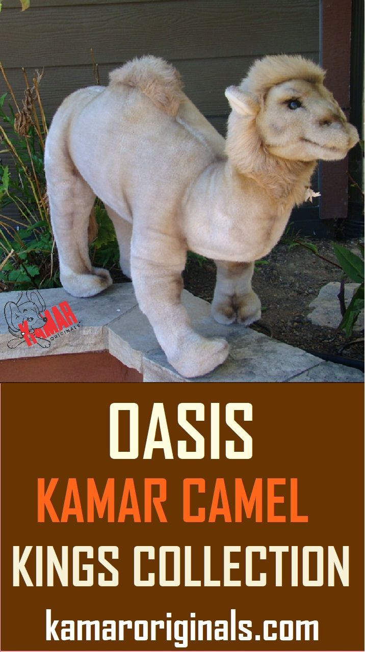 Kamar Vintage Oasis Is A Stunning 34 Inch Tall Camel From The Kamar Kings