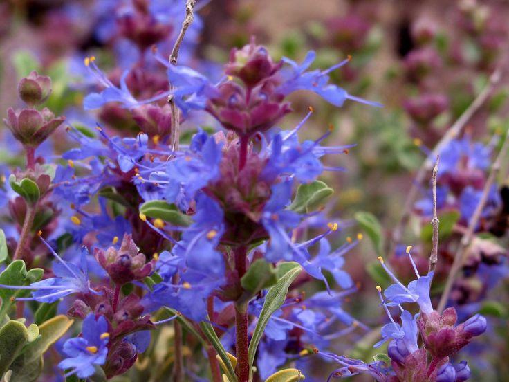 21 best hillside landscaping images on pinterest for Purple low maintenance plants