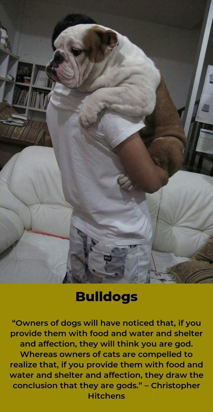 Bulldogs Pup Bulldogshirt Bulldogstyle Bulldog Bulldog Dog Bulldog Shirt