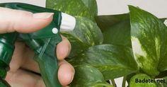 Pridajte 1 lyžicu tohto korenia na vaše rastliny a sledujte, čo sa s nimi stane
