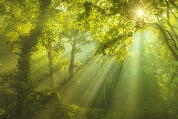 The Forest of Heaven