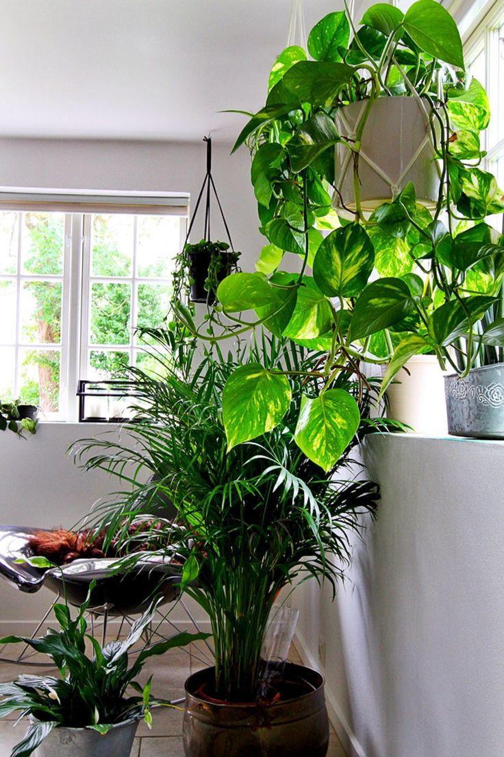 Jeg har været inde på det før – jeg elsker at have masser af planter omkring mig, men mine fingre er mere sorte end grønne ;) Nu er jeg kommet op med en helt ny måde at slå planter ihjel på: …