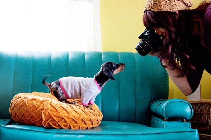 Tips for pet photography by A beautiful mess