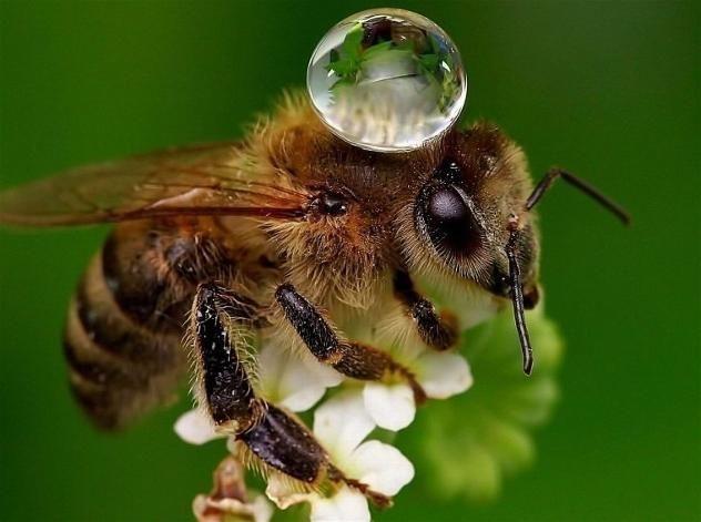 Faites un abreuvoir pour les abeilles et aidez à hydrater nos pollinisateurs