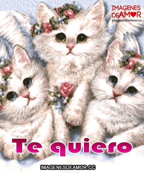 Imágenes de gatitos gif 10