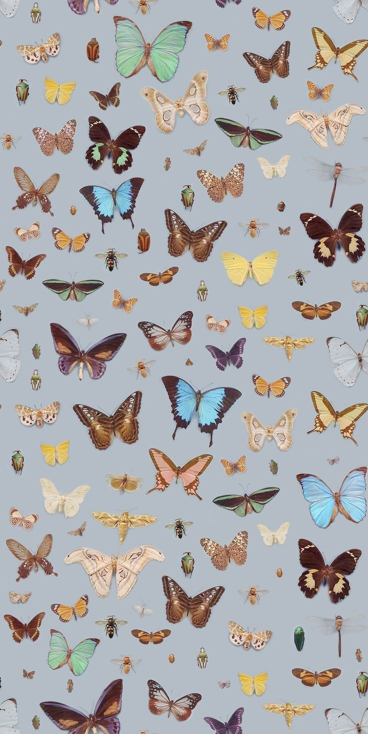 𝘱𝘪𝘯𝘵𝘦𝘳𝘦𝘴𝘵 xrystos Butterfly wallpaper, Iphone