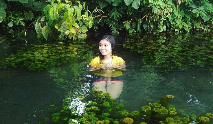 Sumber Sirah Malang Seperti Pesona Danau Kakaban Kalimantan