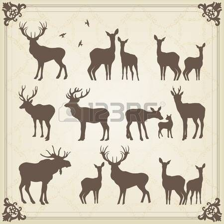 Vintage deer and moose illustration collection photo