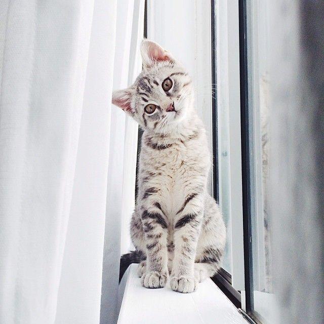 Kitten Head Tilt // via jengotch