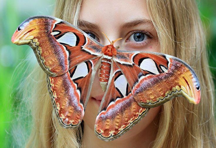 Una mariposa gigante se posa sobre la nariz de una mujer en el Jardín Botánico de Masaryk, República Checa.
