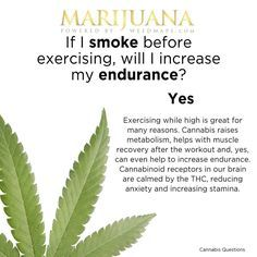 If I smoke before exercising, will I increase my endurance? Yes, Exercising while high is great for many reasons. Cannabis raises metabolism, helps with muscle recovery after the workout and , yes, can even help to increase endurance. Cannabinoid receptors in our brain are calmed by the THC, reducing anxiety and increasing stamina. Both this world's rising athletes and declining elderly can say that they smoke weed to stay sharp.⠀ Marijuana / Cannabis / News / Medical / Health / Fitness…