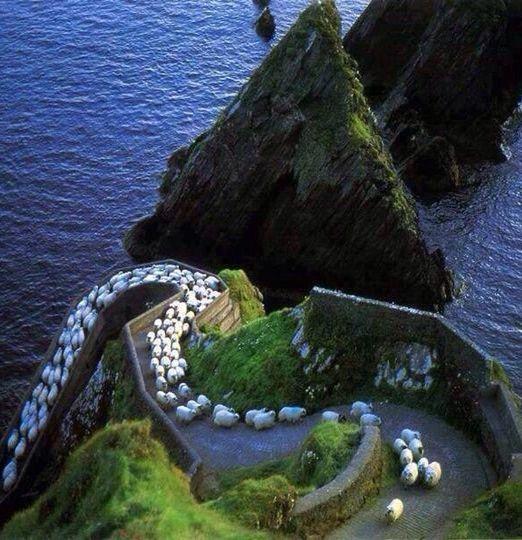 Beautiful Sheeps Highway - Ireland