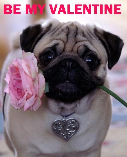 17 Best images about Valentines – Pug Valentine Cards