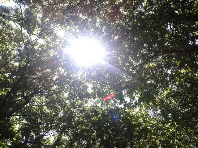 deja entrar la luz del sol