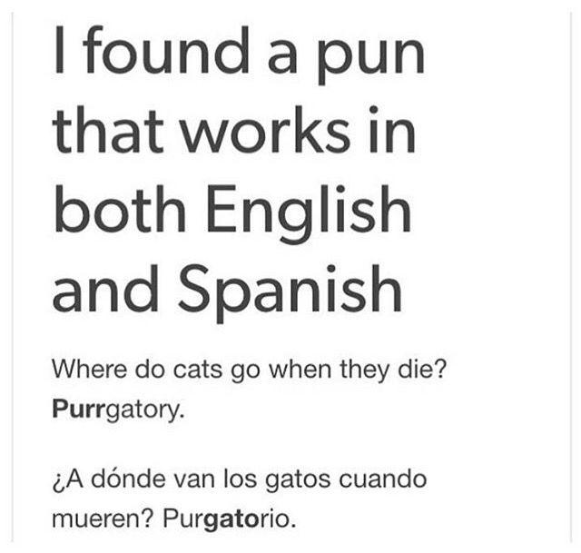 We've found the best joke on the internet, people.