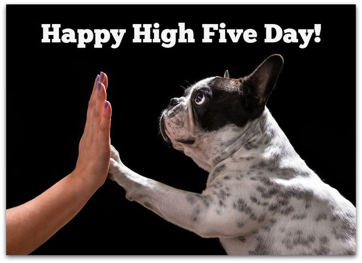 National High Five Day and other strange holidays you need to celebrate.