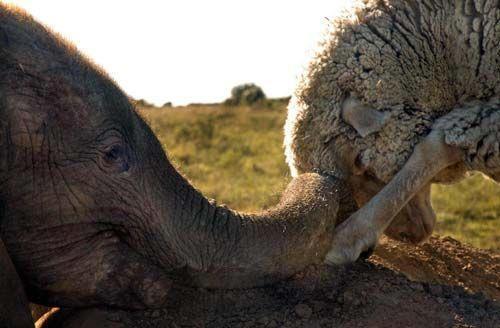 Themba und Albert verbindet ein tiefer Bund der Nähe und Freundschaft.    Wir wünschen uns eine Welt, in der wir mit allen Lebewesen friedlich zusammen leben können.    Eine Welt, in der wir sie nicht mehr für ihr Fleisch, ihre Haut, ihre Milch oder Eier oder für unsere Unterhaltung ausbeuten und umbringen.    Lasst uns in Freundschaft und Achtung mit den anderen Lebewesen auf diesem Planten zusammenleben.     www.animalequality.de/speziesismus