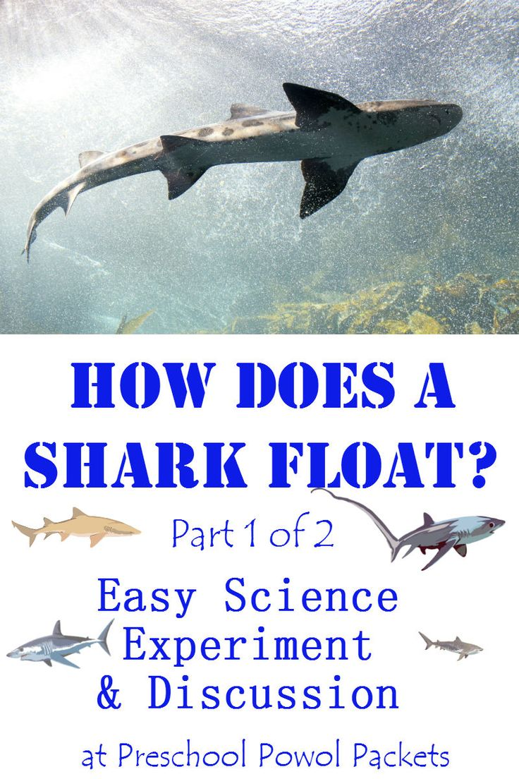 Quick and easy experiment that shows how shark fin shape helps sharks float! Fun for all ages: preschool, kindergarten, and older!
