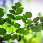 Improvement of Protein Energy Malnutrition by Nutritional Intervention with Moringa Oleifera
