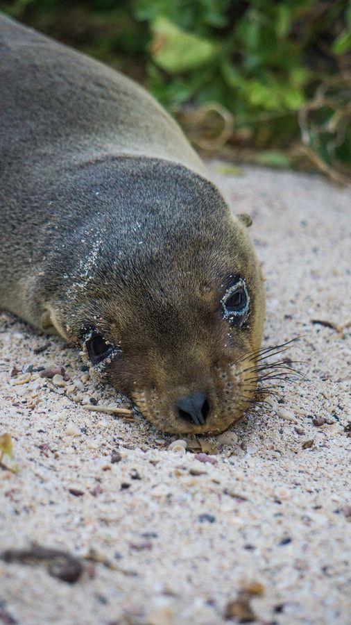(+16) Детеныши морских львов