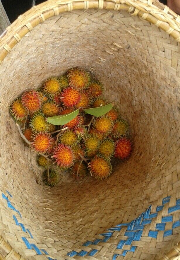 Rambutan Fruit, from my own field - Palangkaraya,  Central Borneo