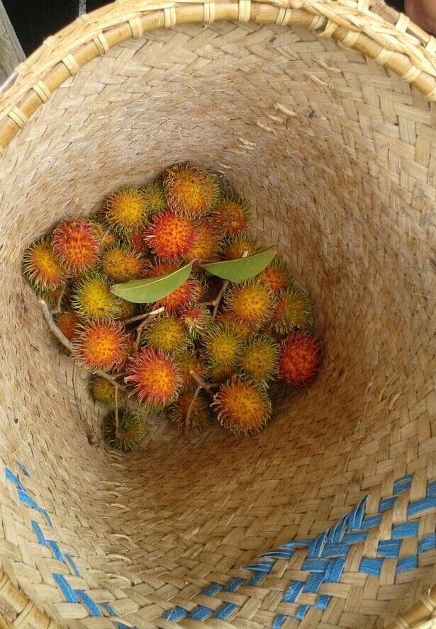 Rambutan Fruit, from my own field - Palangkaraya,  Central Borneo