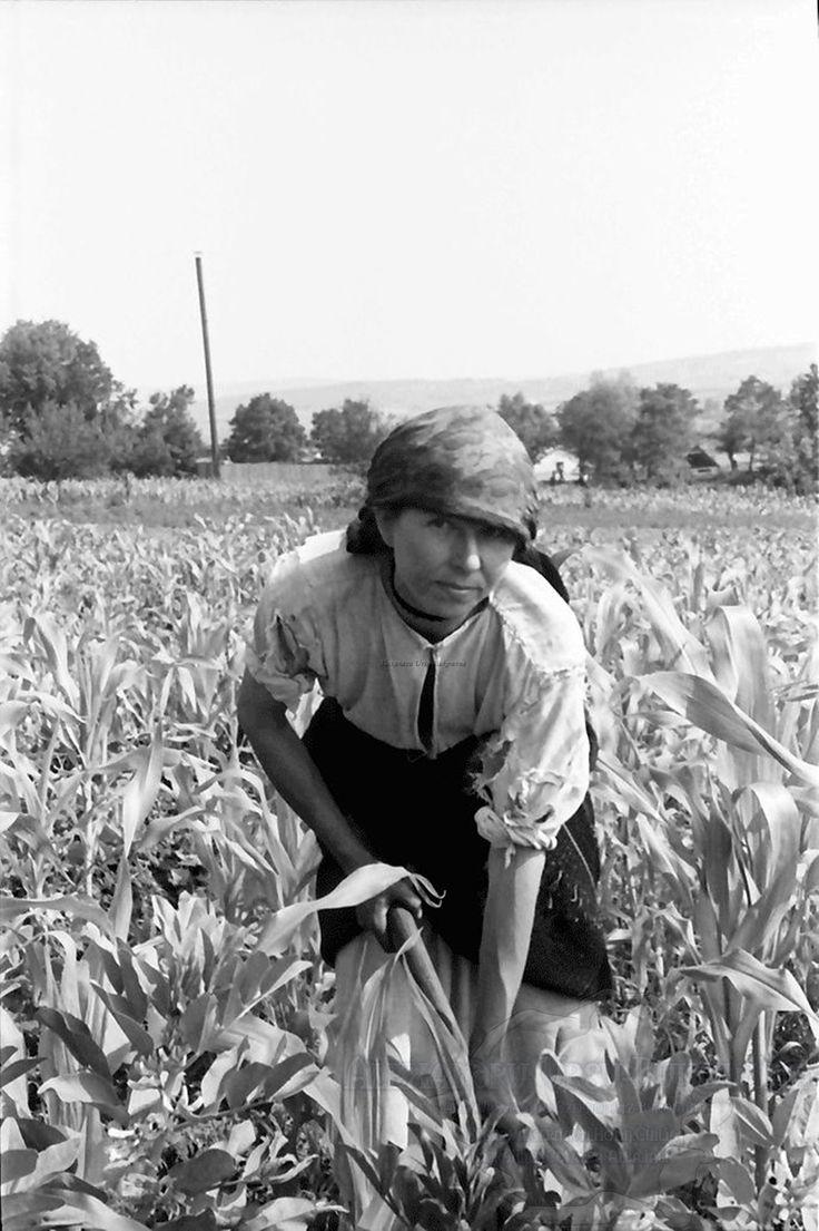 B63.Cernauti.OrasulCernauti.Ukrainische Bäuerin im Mais.24. Juli 1941.Fotograf Willy Pragher