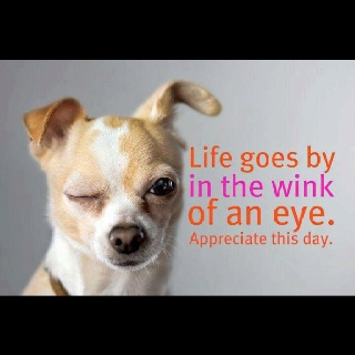 Enjoy Your Day!: Chihuahas, Pets Gotta, Facebook, Enjoy, Inspire