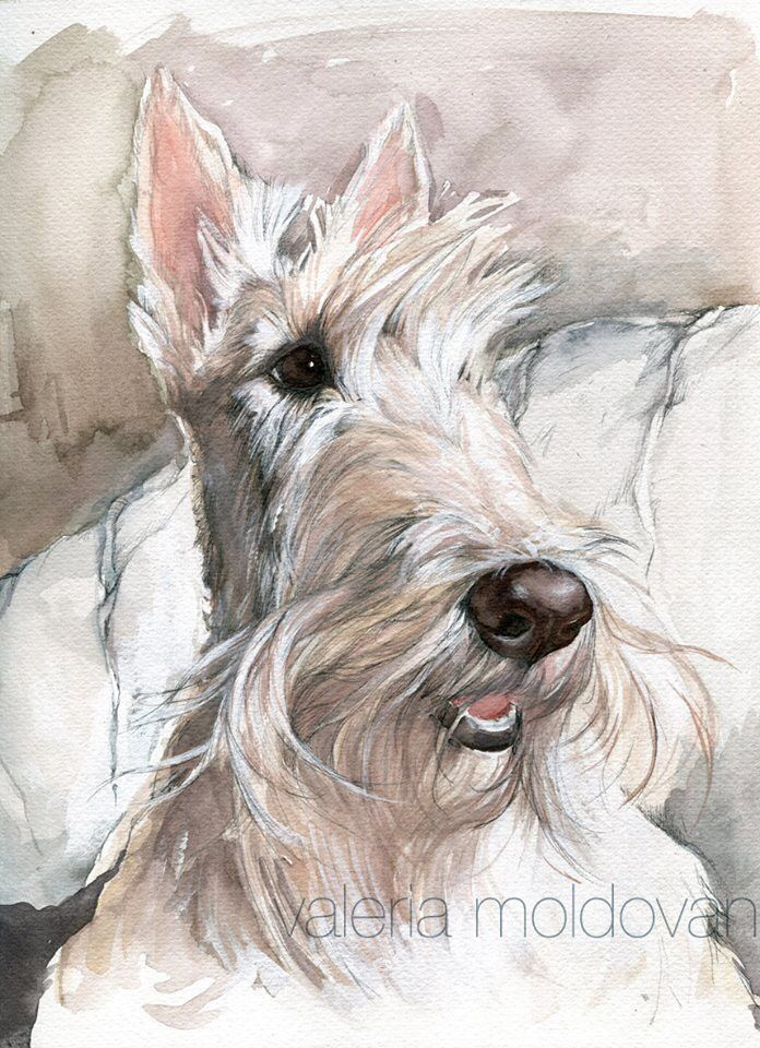 332 best Scottish Terriers images on Pinterest | Scottie dogs ...