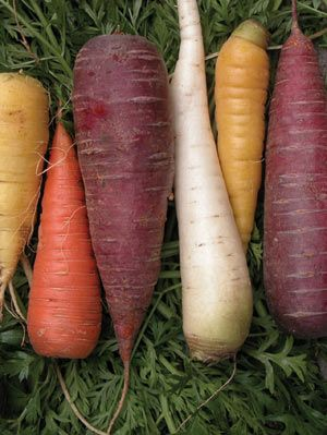 Carrot Heirloom Mix from The Digger's Club. I grew these a couple of years ago and what we didn't eat immediately, I pickled. They looked gorgeous and tasted fantastic!