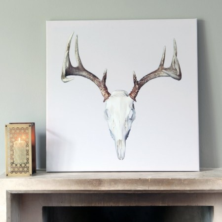 Donnie Deer Skull on Canvas