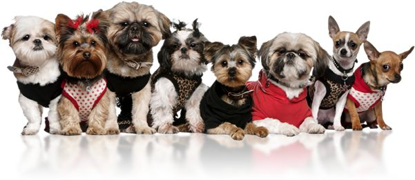 pee pads, wee wee pads, shaped pads, bone pad, house pad, stocking pad, heart pad, puppy pads, training pads, pee pee pads, Hollywood, pads, Hollywood Pads, hollywood pads, pet products, puppy, puppies, printed pads, pads with print, stylish pads, dog pads, fancy pads, celebrity dogs, celebrity pets, hollywood dogs, trendy pads, small dog products, patented dog pads, Ventura, training aids for dogs, housebreaking pads, house training pads, house breaking pads, trendy pets, Christmas pads…